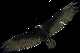 Vulcher PNG - 54220