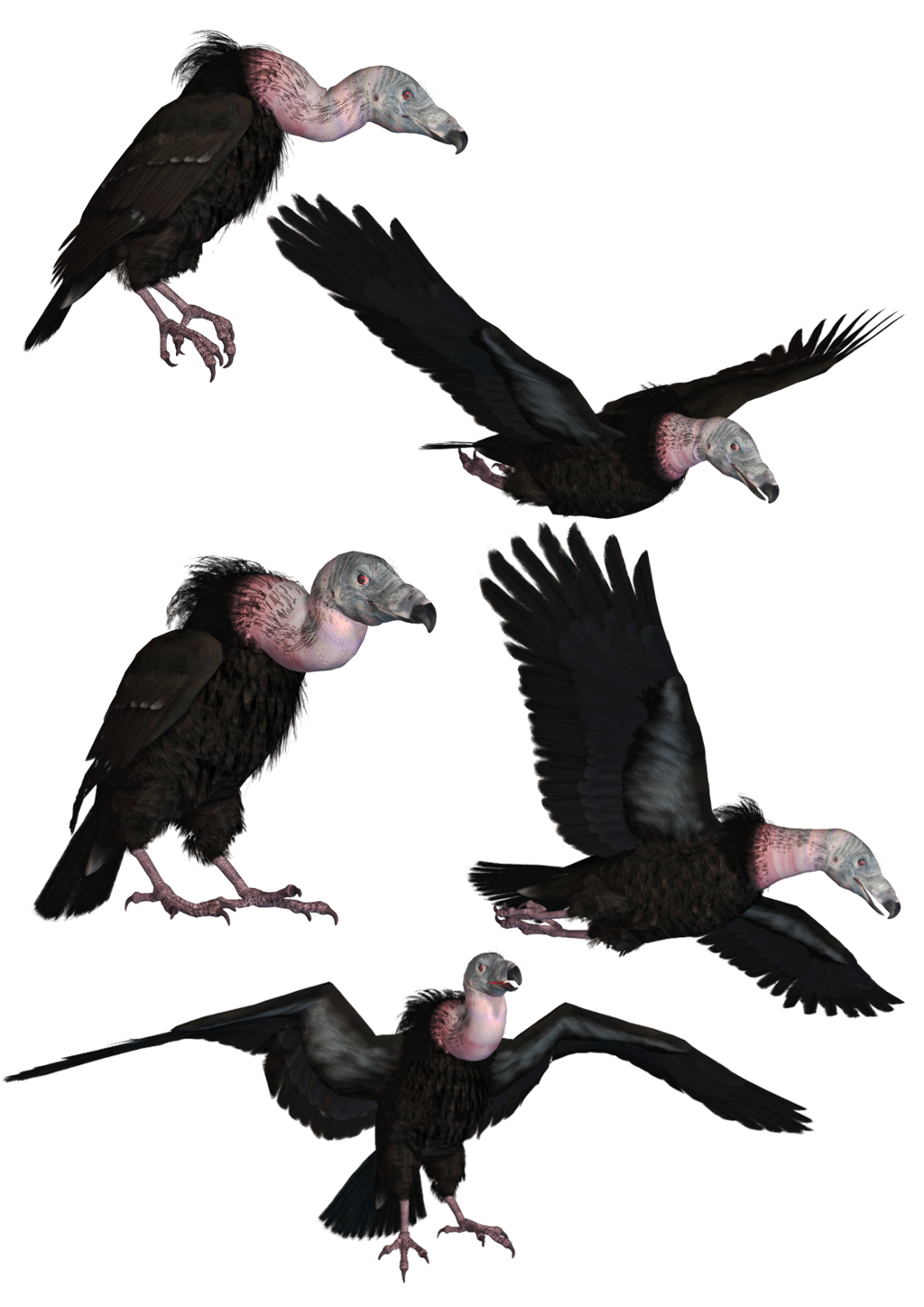 Vultures PNG Stock by Roy3D Vultures PNG Stock by Roy3D - Vulcher PNG
