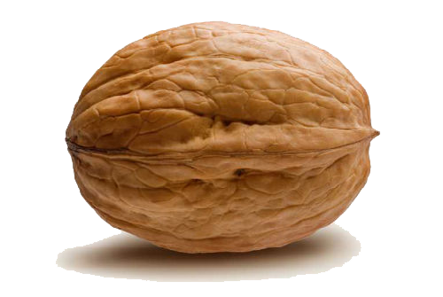 Download PNG image - Walnut Png - Walnut HD PNG