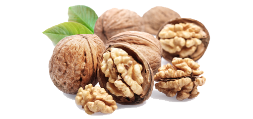 Walnut - Walnut HD PNG