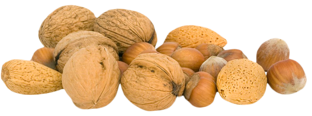 Walnut PNG-PlusPNG.com-1070 - Walnut PNG