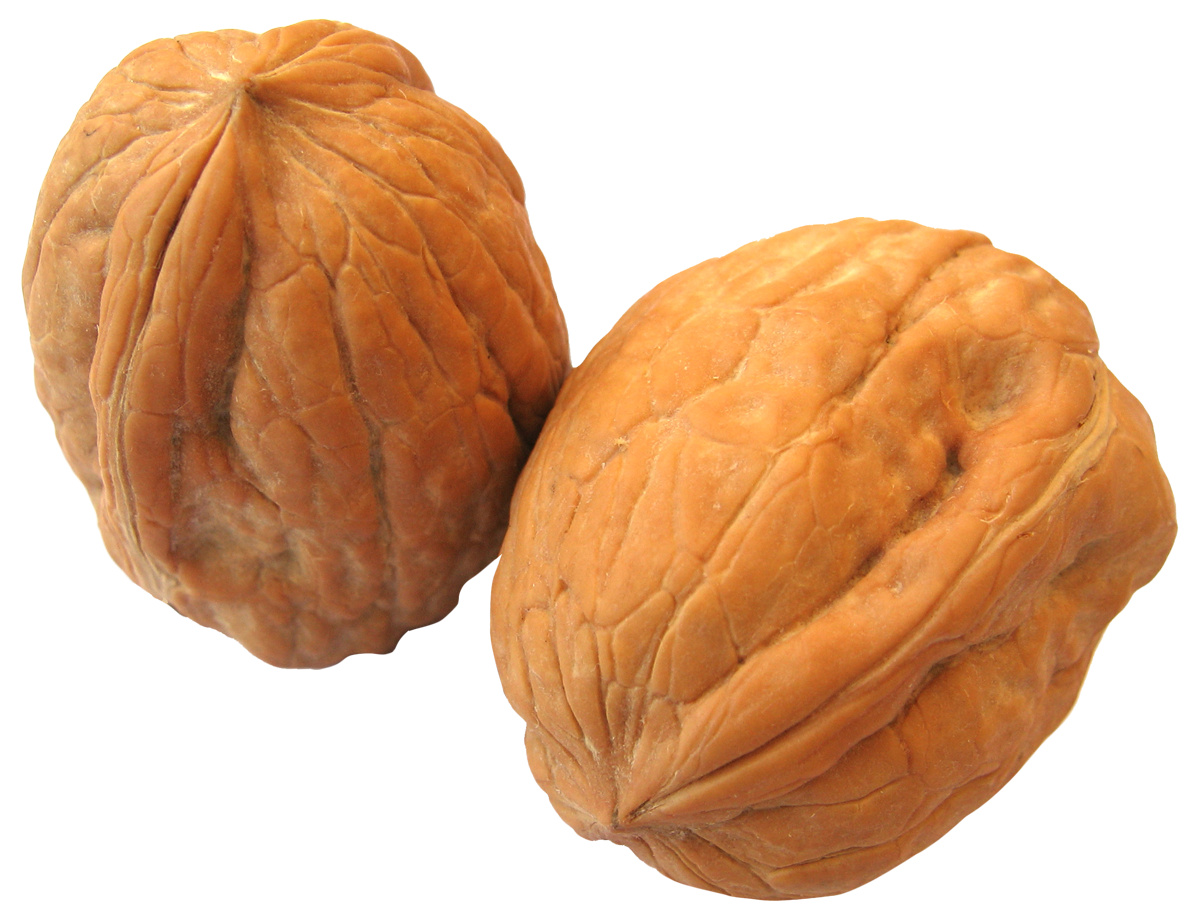 Walnut PNG-PlusPNG.com-1202 - Walnut PNG