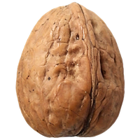 Walnut Png Clipart PNG Image - Walnut PNG