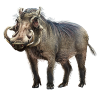 Huge item warthog 01 - Warthog PNG HD