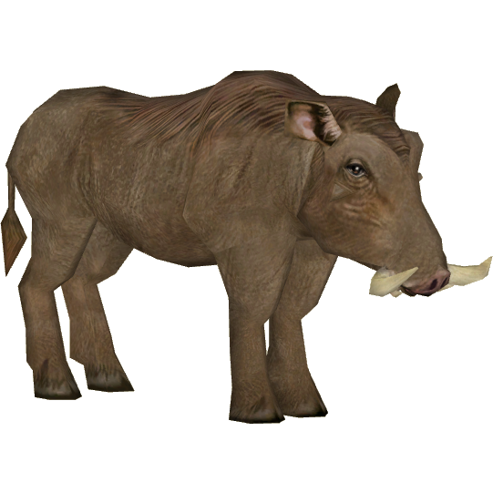 Somali Warthog (Tamara Henson).png - Warthog PNG HD