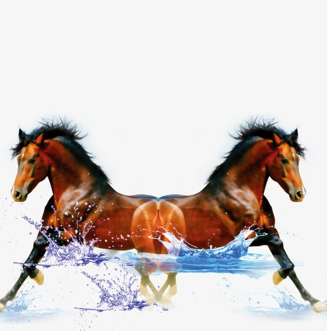 horse running in water, Water, Horse, Splash PNG and PSD - Water Horse PNG