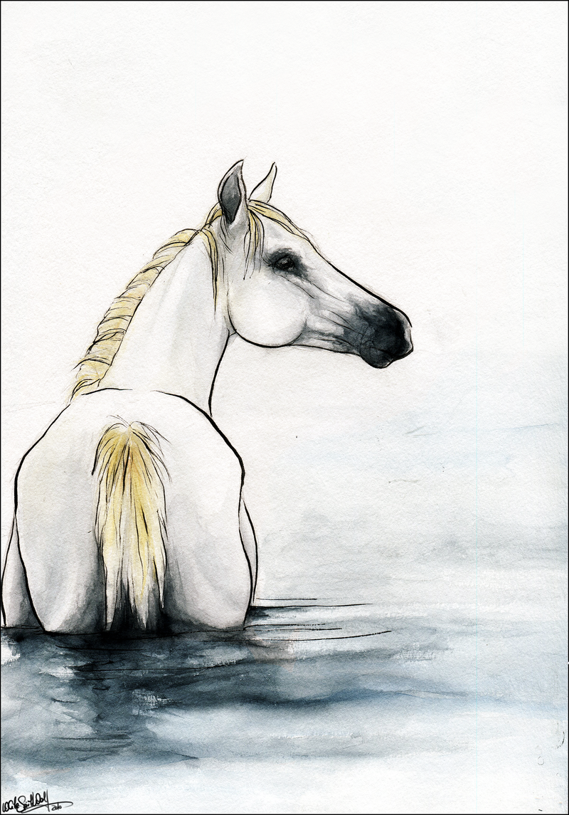 Water Horse:. by WhiteSpiritWolf - Water Horse PNG