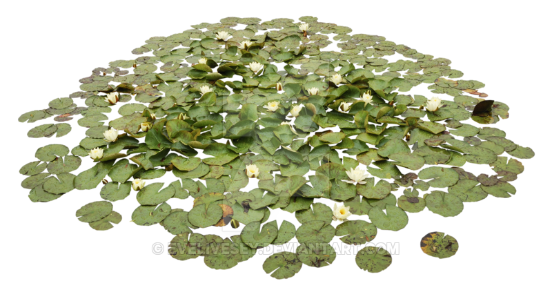 ACUÁTICAS Waterlily Pond PNG by EveLivesey - Water Lily PNG