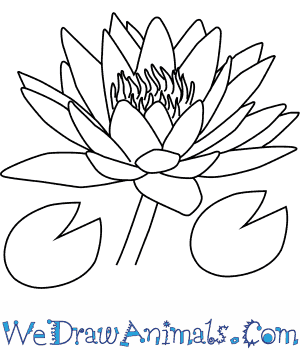Water Lily PNG Black And White-PlusPNG.com-300 - Water Lily PNG Black And White