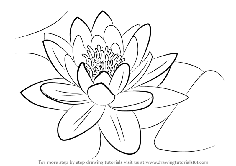 Water Lily PNG Black And White-PlusPNG.com-800 - Water Lily PNG Black And White