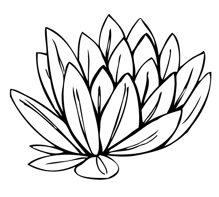 Water Lily PNG Black And Whit