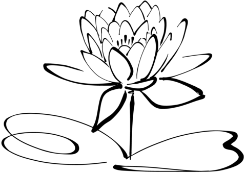 Click to see printable version of Water Lily Coloring page - Water Lily PNG Black And White