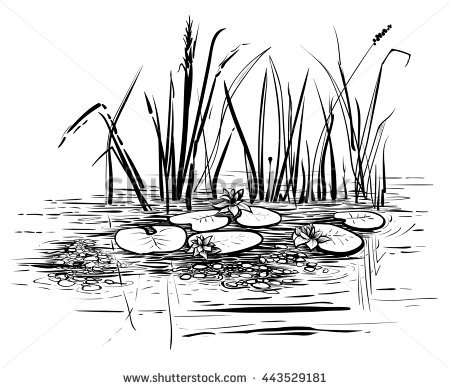 Vector reeds and water lilies. Scene with lotus in the pond illustration.  Black and - Water Lily PNG Black And White