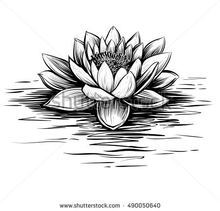 Vector waterlily with water waves. Lotus illustration. Black and white  graphic art line. - Water Lily PNG Black And White