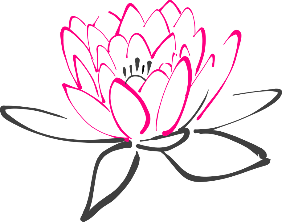 Water Lily, Flower, Pink, Lotus, Lily, Blossom, Bloom - Water Lily PNG Black And White