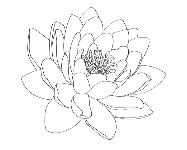 Water Lily Tattoo Designs Creative water lily tattoo design . PlusPng.com | Hip  Tattoo Designs Water Lily | Pinterest | Water lily tattoos, Lily tattoo  design and PlusPng.com  - Water Lily PNG Black And White