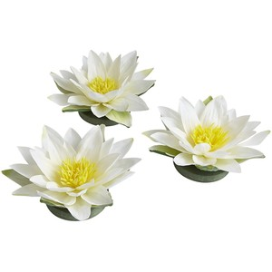 Pier 1 Imports Floating Faux Water Lilies - Water Lily PNG