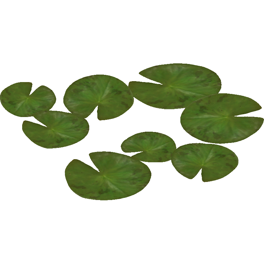 Water Lily (Zeta-Designs)5.png - Water Lily PNG