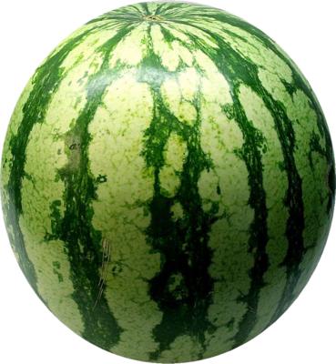 Watermelon HD PNG - 118683
