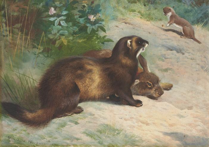 File:Thorburn polecat rabbit u0026 weasel.png - Weasel PNG HD