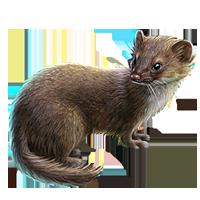 Huge item leastweasel 01 - Weasel PNG HD