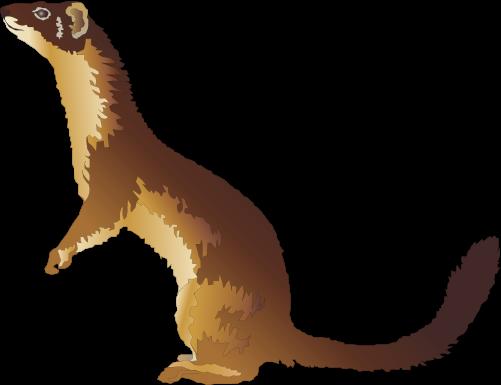 weasel clip art #2 - Weasel PNG HD