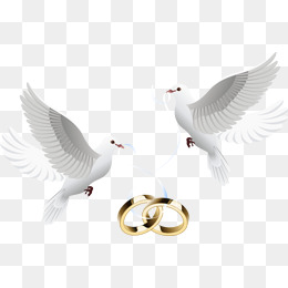Dove inlay ring, Ring, Pigeon, Feige PNG Image - Wedding Dove PNG HD