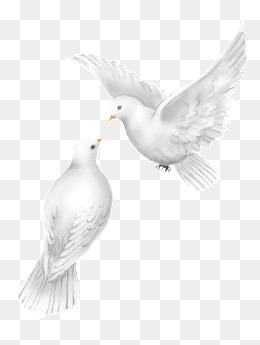 Wedding Dove PNG HD - 130607
