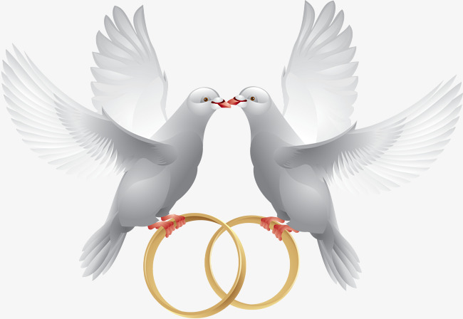 Two doves, Hand Painted, Peace Dove, White PNG Image - Wedding Dove PNG HD