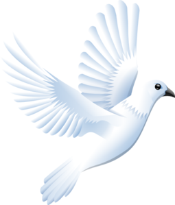 white dove clipart - Wedding Dove PNG HD