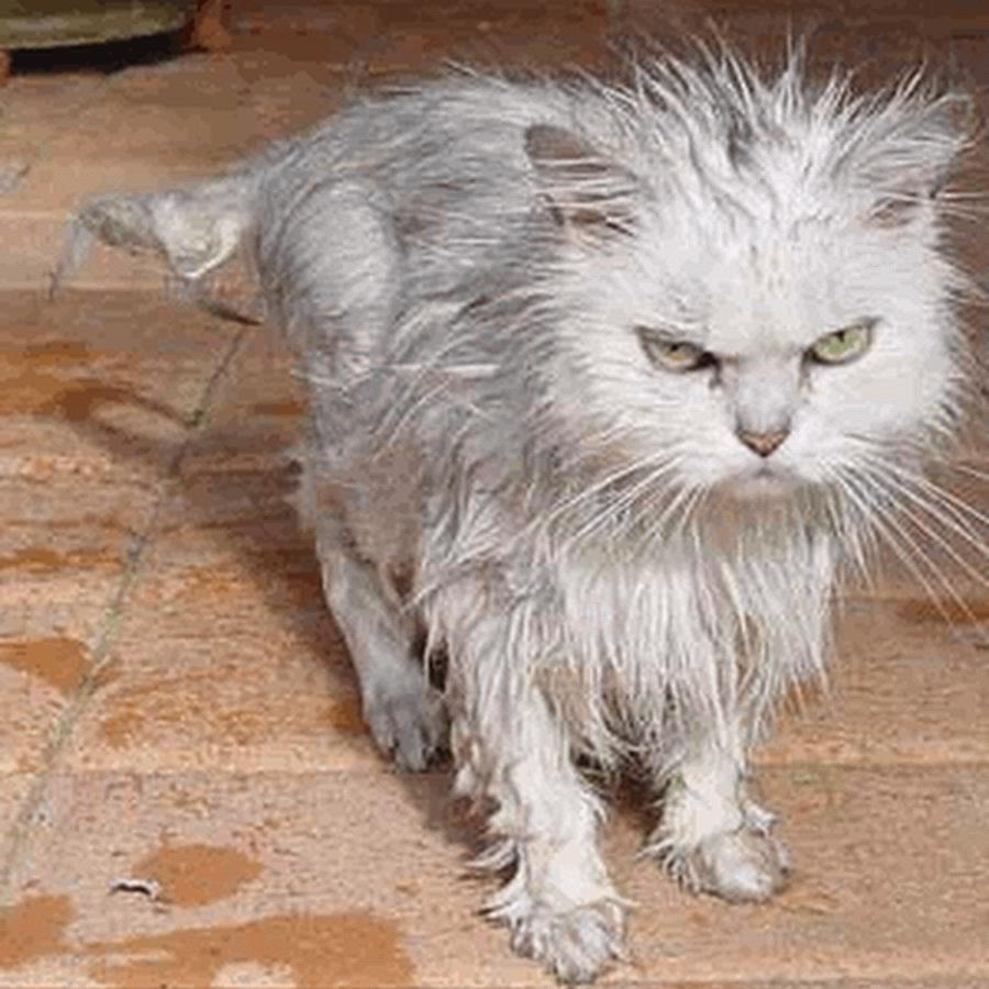 Wet Cat PNG - 151507