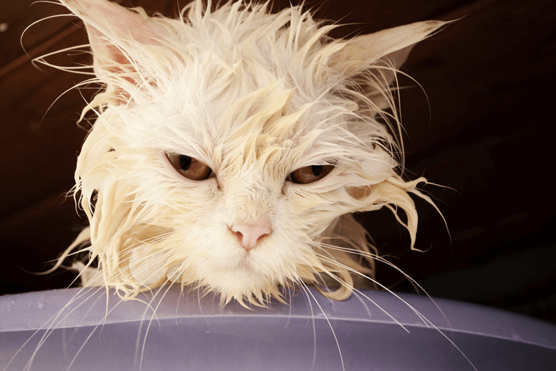1-internet-cat - Wet Cat PNG
