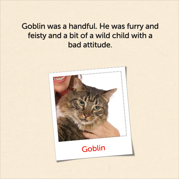 Goblin was a handful. He was furry and feisty and a bit of a wild - Wet Cat PNG
