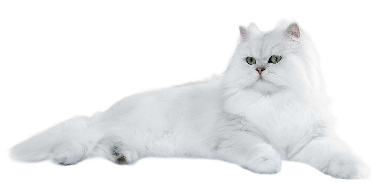 Wet Cat PNG - 151511