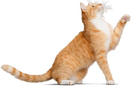 Wet Cat PNG - 151513