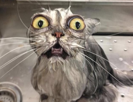 Laugh At These Wet Cats! | Warped Speed - Wet Cat PNG