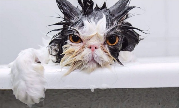 Like us on Facebook - Wet Cat PNG