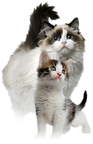 Wet Cat PNG - 151510