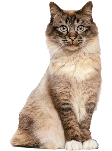 Product Benefits - Wet Cat PNG