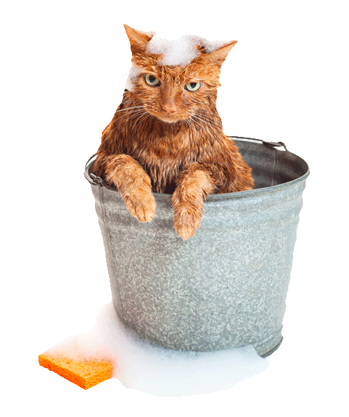 . PlusPng.com Solar-Trak is engineered with a water resistant and reinforced acrylic  coating, so you can be sure it will endure even the craziest of pet habits. - Wet Cat PNG