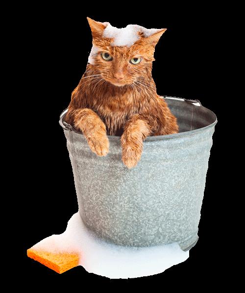 Wet Cat PNG - 151504
