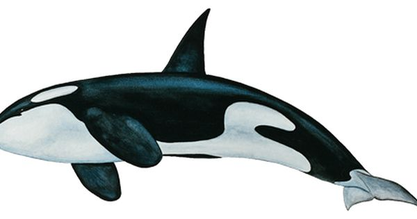 Whale PNG - 27208