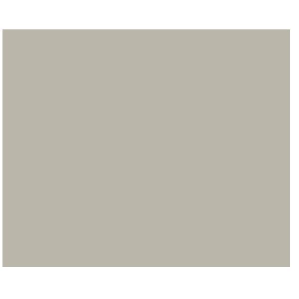 White Birch Tree PNG - 154408