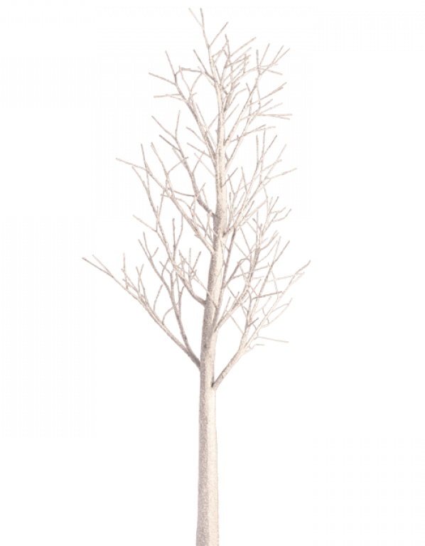 Christmas Tree PNG by dbszabo1 PlusPng.com  - White Birch Tree PNG