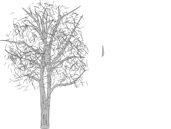 Download this image as: - White Birch Tree PNG