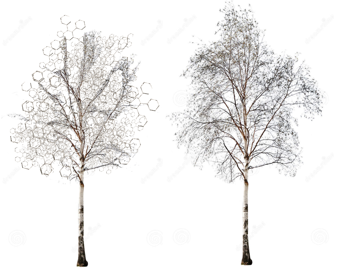 How I perceived a birch tree under influence vs normal PlusPng.com  - White Birch Tree PNG