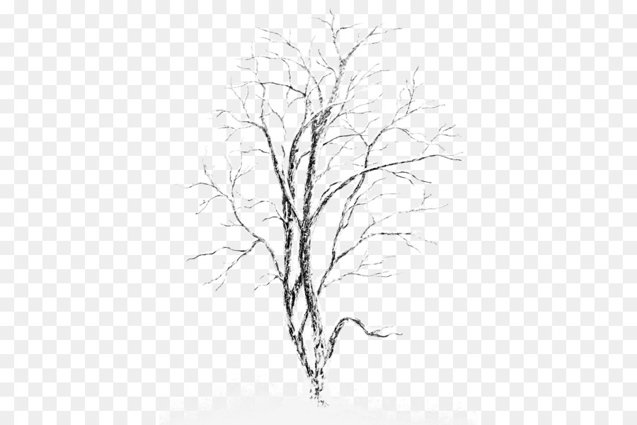 Silver birch Tree Clip art - Snow-covered trees - White Birch Tree PNG