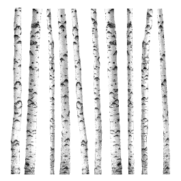 White Birch Trees wall decal - White Birch Tree PNG