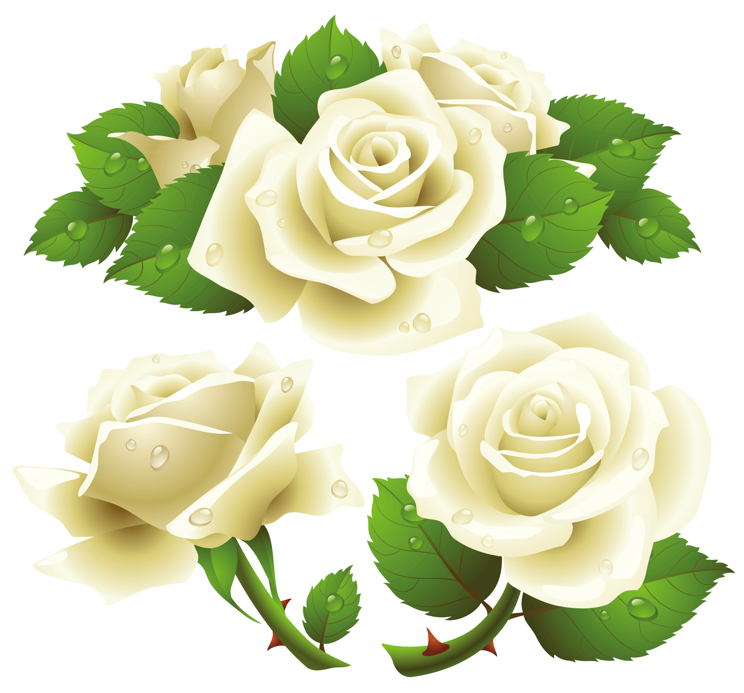 White Roses PNG - 16410