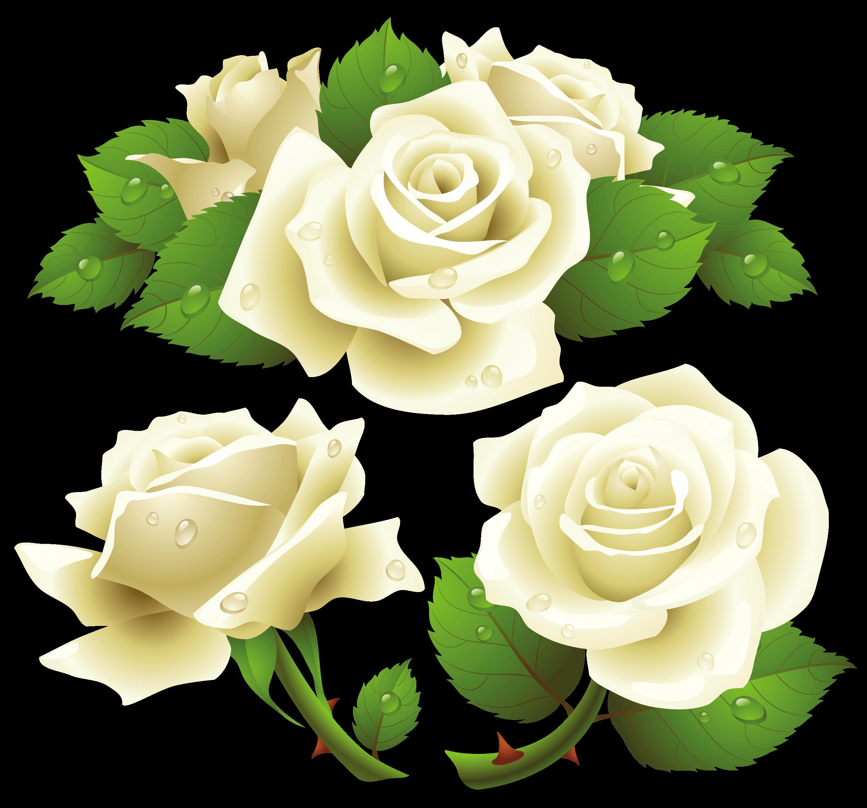 Download PNG image - White Rose Png Image Flower White Rose Png Picture - White Roses PNG